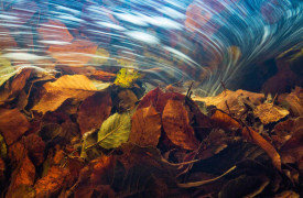K6_07_Theo-Bosboom_Die-Reise-der-Herbstblaetter_The-journey-of-the-autumn-leaves